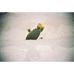 Marzamemi, May 2016 (dreifachzucker) Tags: istillshootfilm filmisnotdead believeinfilm lomographylca lomo lca 35mm film c41 kodakportra160 analog analogue italia italy sicilia sicily marzamemi may21st2016 may 2016 autaut