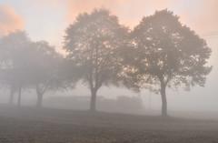 Just before sunrise (Radosław Matysek) Tags: px38 px38805 narrow gauge steam żnińska kolej powiatowa wenecja biskupin poland
