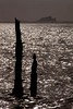 The Stakes Are High (Julian Barker) Tags: bamburgh castle budle bay lindisfarne holy island northumberland north east glistening bright dark brooding menacing sea coast water stakes wood silhouette julian barker canon dslr 5d mkii