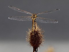 (angelalonso57) Tags: canon nature insecto 300mm f8 70300mm eos 1300d ƒ80 3000 mm 1400 100 losinsectosquefuiencontrandoporelcamino delagaleria