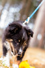 _DSC0608.jpg (karin27) Tags: portland dog baxterpines zeb isla maine elin puppy
