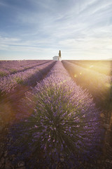 Les matins sous le soleil (jonathan le borgne) Tags: sunrise soleil sun rayons ray colors flowers lavender lavande violet bleu sky light house three provence valensole clouds field france canon canon6d canon1635f28iilusm