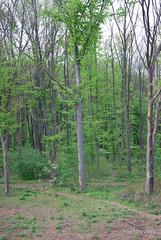 Ботанічний сад імені Гришка Буковий гай InterNetri  Ukraine 082