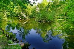 Verwunschener Teich (antje whv) Tags: teich bäume trees pond spiegelungen reflection wilhelmshaven stadtpark
