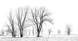 Tree Line in Mono
