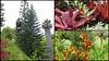Maui Flora (PDX Bailey) Tags: hawaii maui