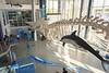 Музей Мирового океана (vikkay) Tags: калининград музей кашалот скелет дельфин океан экспозиция выставка