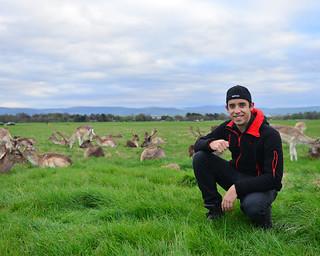 47. Diario de un Mentiroso con los ciervos del parque Phoenix de Dublín
