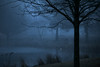 Blue Swamp (chantsign) Tags: morning winter blue park tree foreground water pond light dawn dim landscape lowvision