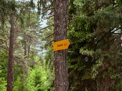 Stockalperweg_26. Mai 2018-17 (silvio.burgener) Tags: saltina saltinaschlucht rosswald riedbrig brig viastockalper stockalperweg wallis schweiz switzerland