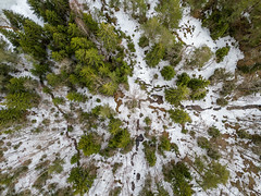 Spring is coming (kaifr) Tags: trees snow drone outdoor birdseyeview winter forest telemark norway no