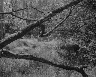 Branches (Hyons Wood)
