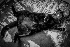 Hades (Chilanga Cement) Tags: fuji fujix100f xseries x100f 100f bw blackandwhite monochrome cat hades puss kitty whiskers tail