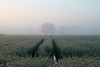 _MG_1682_C (grzegorz_63) Tags: sunrise mist fog rye trace trees perspective field nature outside canon70d