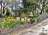 La Rochelle - Parc Charruyer (JeanLemieux91) Tags: pont puente bridge jonquilles flowers flores fleurs jaune amarillo yellow la rochelle charentemaritime poitoucharentes france europe march mars marzo 2018 hiver winter invierno