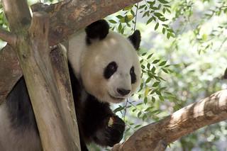 Happy Bai Yun