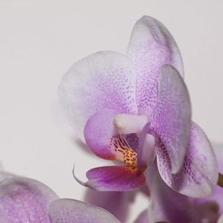 365.80 - Orchid again