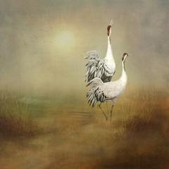 The dance begins (BirgittaSjostedt) Tags: bird grusgrus crane texture paint lanscape birgittasjostedt
