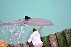 DSC_8599 (seustace2003) Tags: gaillimh galway ierland ireland irlanda inis oírr aran islands gaeltacht dolphin deilf delfin