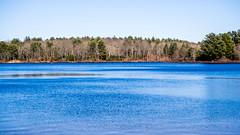 beautiful day (marinachi) Tags: water blue waterscape trees forest connecticut sundaylights olympus em10markii olympusem10markii