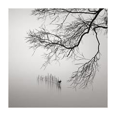 an exotic stillness (StephenCairns) Tags: japan shiga spring rain mist lake water still quiet serene silent poles biwa lakebiwa