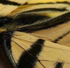 Butterfly (Paul Broderick) Tags: butterfly lightroom nikond90 macro