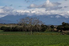 El Montseny. (nuri_bri) Tags: elmontseny neu turódelhome turodelhomenevat barcelonaturismo barcelona larocadelvalles paisatge paisaje landscape primavera abril 2018 parcnaturaldelmontseny