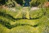 MB - Bild 001 - 19. Mai 2018.jpg (markobablitz) Tags: canon eos 70d teleobjektiv müritznationalpark gans gänse goose
