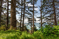 Siuslaw National Forest - Cape Perpetua -  Oregon - Photography (Cathy Neth) Tags: adventure adventurer aspentrees beach beachlandscapes bluesky capeperpetua cathyneth circularpolarizer coastlandscapes coastalphotos coastline create discover elephantrock explore exploretocreate fineart fineartphotography forest forestphotography forestphotos landscape landscapephotography landscapes leefilters longexposure nationalforestphotography nationalforestphotos nature naturephotography nikon nikond810 ocean oceanandforest oceanphotography optoutside oregon oregonlandscapephotography oregonlandscapes oregonnaturephotograpy oregonphotography oregonphotos pacificnorthwest pacificnorthwesttrees pacificocean pacificoceanlandscapes photography photos pinetrees pnw siuslawnationalforest treephotography trees wander water westcoast