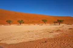 Deadvlei dunes and trees in Namib Naukluft National Park (jgokoepke) Tags: namibnaukluftnationalpark deadvlei desert dawn namibia sossusvlei dune dunes sand tree trees