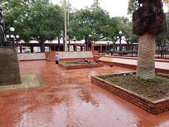 Ybor City (heytampa) Tags: ybor yborcity conner hey park chickens roosters centennialpark