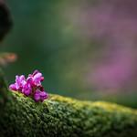 Vivid Spring thumbnail