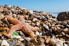 all washed up (SCRIBE photography) Tags: uk england dorset hampshire barton highcliffe sea seashore shoreline pebbles water ocean animal wildlife sand wave starfish seaglass glass sunshine holiday seaside