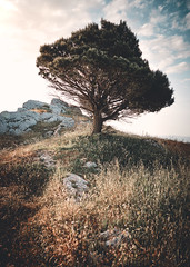 Sicily: Tree on Rocks near Caltabellota. (icarium82) Tags: agrigento caltabellota canoneos5dmarkiv hillside landscape meadows rural sicilia sicily sigma24105mmf4dgoshsmart sunrise travel triocala tree rocks orangeandteal