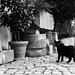 The Roaming Cat