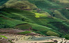 Green fields (trai_thang1211) Tags: fields greenery green greenfield