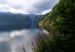Nordic beaut (annazelei) Tags: green nature water blue blau paysage landscape natural naturaleza nord nordic norway august summer flower landschaft flickr outdoor travelling hill beach coast light flora sky lights journey passage trip holiday norge fjord serene tree river mountain