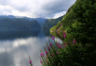 Nordic beaut