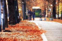 In fondo...niente è per caso... (encantadissima) Tags: torino piemonte viale alberi foglie ragazzi bici street