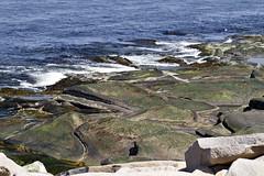 Blue and Green (brucetopher) Tags: sea ocean rocks ledges searocks atlantic massachusettsbay sandybay blue water coast cove bay boulders rock wave waves lowtide park seacoast coastline coastal