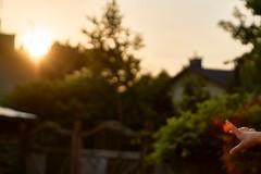 catch the sun (van1o) Tags: sun summer twilight evening hand garden bokeh sonyilce600 pentax pentax1250mm sunset goldenhour