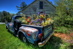 Colorful Flower Box (Tom Mortenson) Tags: wisconsin ellisonbay doorcounty highway42 chevrolet chevypickup rusty usa geotagged america midwest northamerica flowerbed abandonedgarage floral decorations hdr