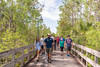 FGCU Food Forest University Colloquium 2018-9 (FGCU | University Marketing & Communications) Tags: fgcu summer2018 campustrail sustainability foodforest students fgcunature colloquium fgcunaturalist naturetrial education garden plants boardwalk