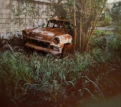 ○● dodge 56 ○● (ivethmendez86) Tags: cars carro old antiguo dodge garden beautiful