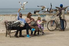 self seagull (Iron P. Alves) Tags: street photography morocco essaouira