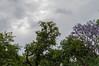 Ψίνθος (Psinthos.Net) Tags: μετάτηβροχή μετάτηνβροχή afterrain aftertherain rainingmorning rainin βροχερήμέρα βροχερόπρωί πρωί mor πρωίάνοιξησ ανοιξιάτικοπρωί άνοιξη spring may μάιοσ μάησ φύση nature βρύση βρύσηψίνθου βρύσηψίνθοσ περιοχήβρύση vrisi vrisiarea vrisipsinthos φύλλα leaves clouds cloudy cloudiness sky ουρανόσ σύννεφα νέφη συννεφιά πλάτανοσ planetree tree δέντρο κλαδιάδέντρων treebranches πλατάνοι πλάτανοι πλατάνια planetrees valley psinthosvalley κοιλάδα κοιλάδαψίνθου κοιλάδαψίνθοσ rosebush τριανταφυλλιά μώβδέντρο purpletree purpleblossoms μώβάνθη άνθη blossoms δέντρα trees κορμοίδέντρων treetrunks