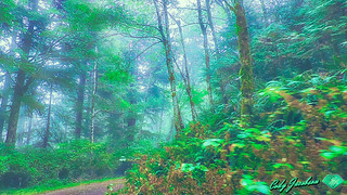 SUPERNATURAL BACKCOUNTRY HAZE-ROGUE RIVER-SISKIYOU NATIONAL FOREST-HDR © Cody Jacobson-ZEN MOUNTAIN MEDIA all rights reserved