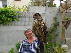 DSC07689 (guyfogwill) Tags: 2018 birds brandonsbirthday devon eurasianeagleowl gbr guyfogwill lynnfogwill may owls paignton unitedkingdom paigntontorquay