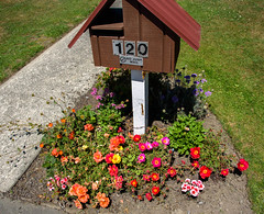 Lots of Colours (Jocey K) Tags: newzealand nikond750 christchurch flowers litterbox numbers