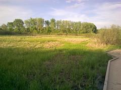 wetland20180525_1946 (pix-l) Tags: nokia635 49505 grandrapids parkandrecreation huffpark wetland boardwalk marsh bullrush
